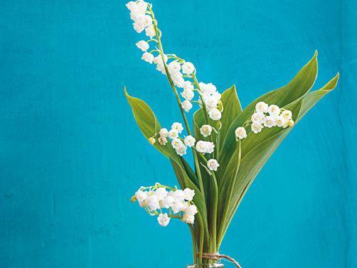Maria! Dir befehlen wir, Was grünt und blüht auf Erden, O lass es eine Himmelszier In Gottes Garten werden. Foto: Galya Ivanova / Getty Images